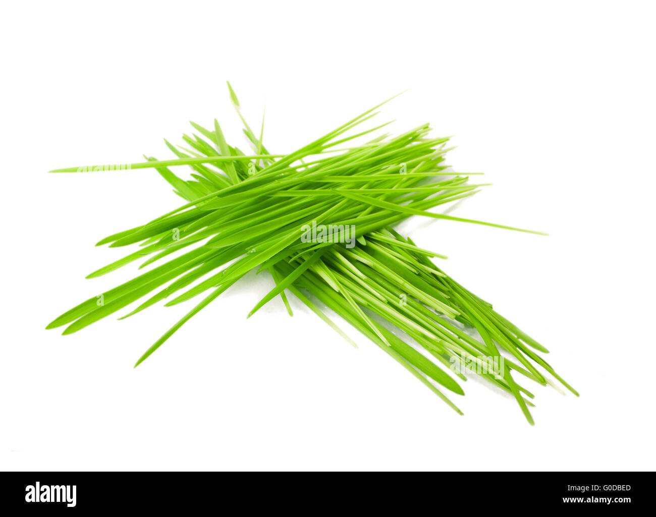 green grass in bundles isolated on white background - Stock Image