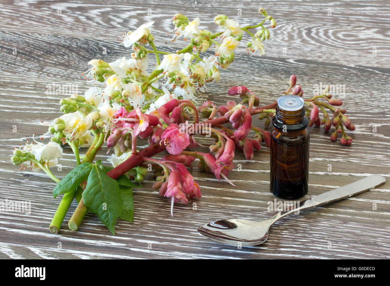 Bach flower remedies of red and white chestnut stock photo bach flower remedies of red and white chestnut mightylinksfo
