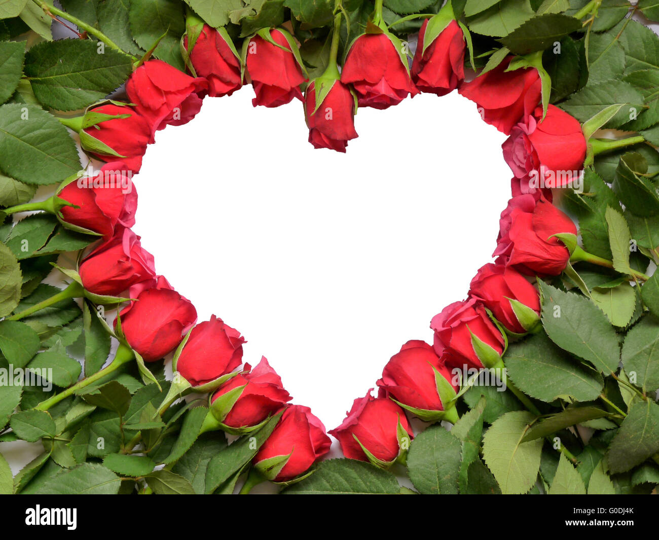 Heart made of red roses on stem - Stock Image