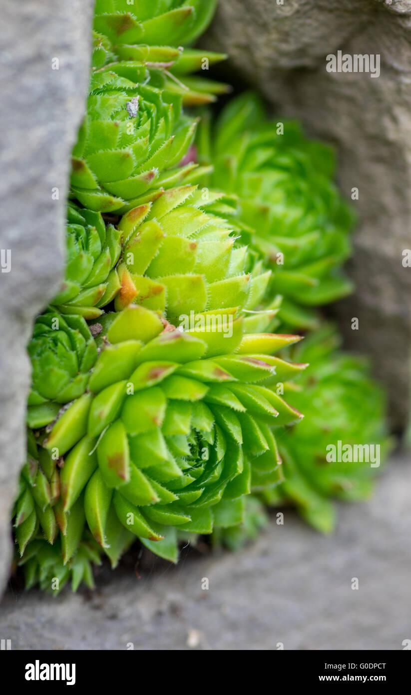 Summergarden beauty Stock Photo