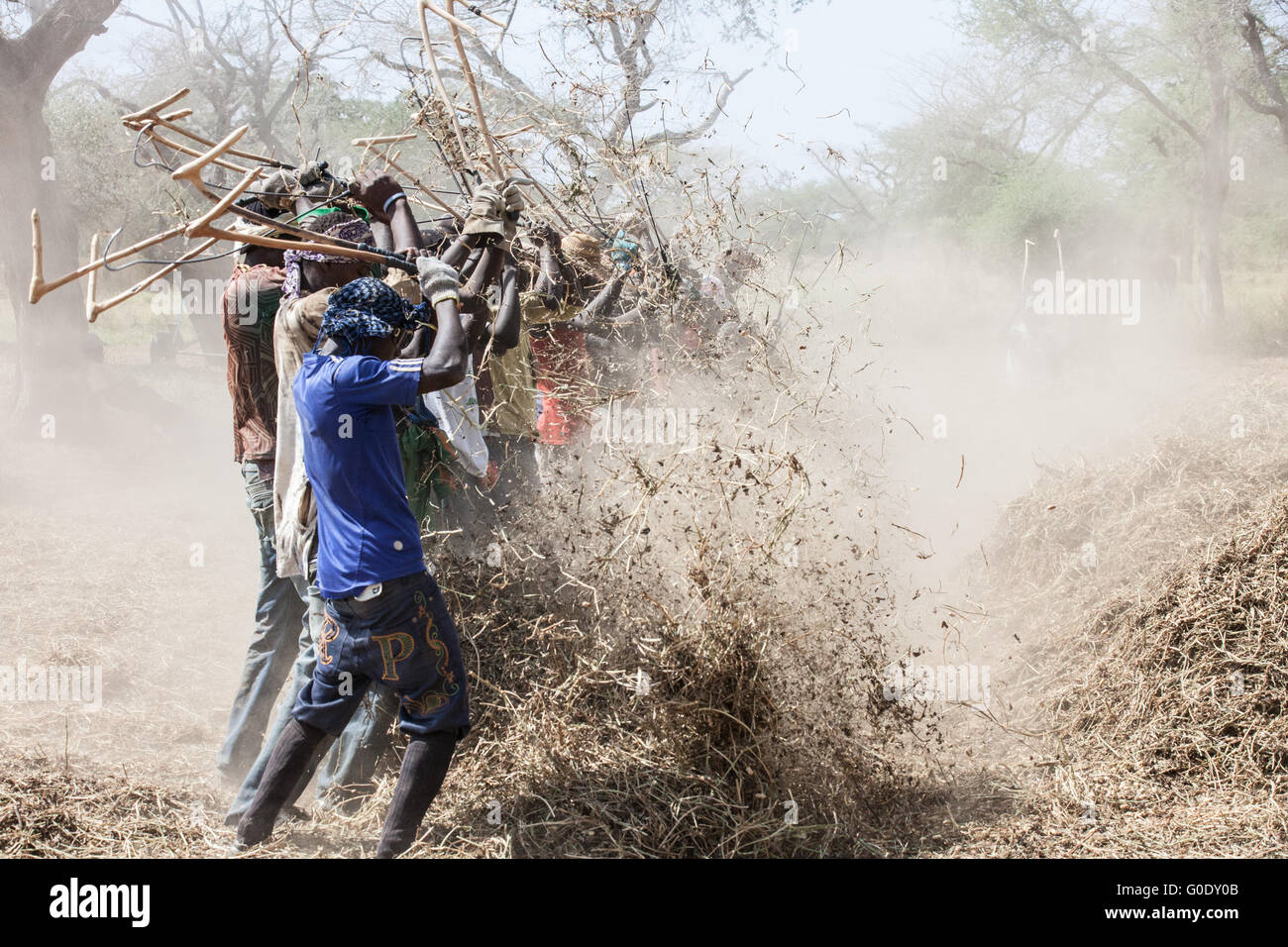 Peanut pickers - Stock Image