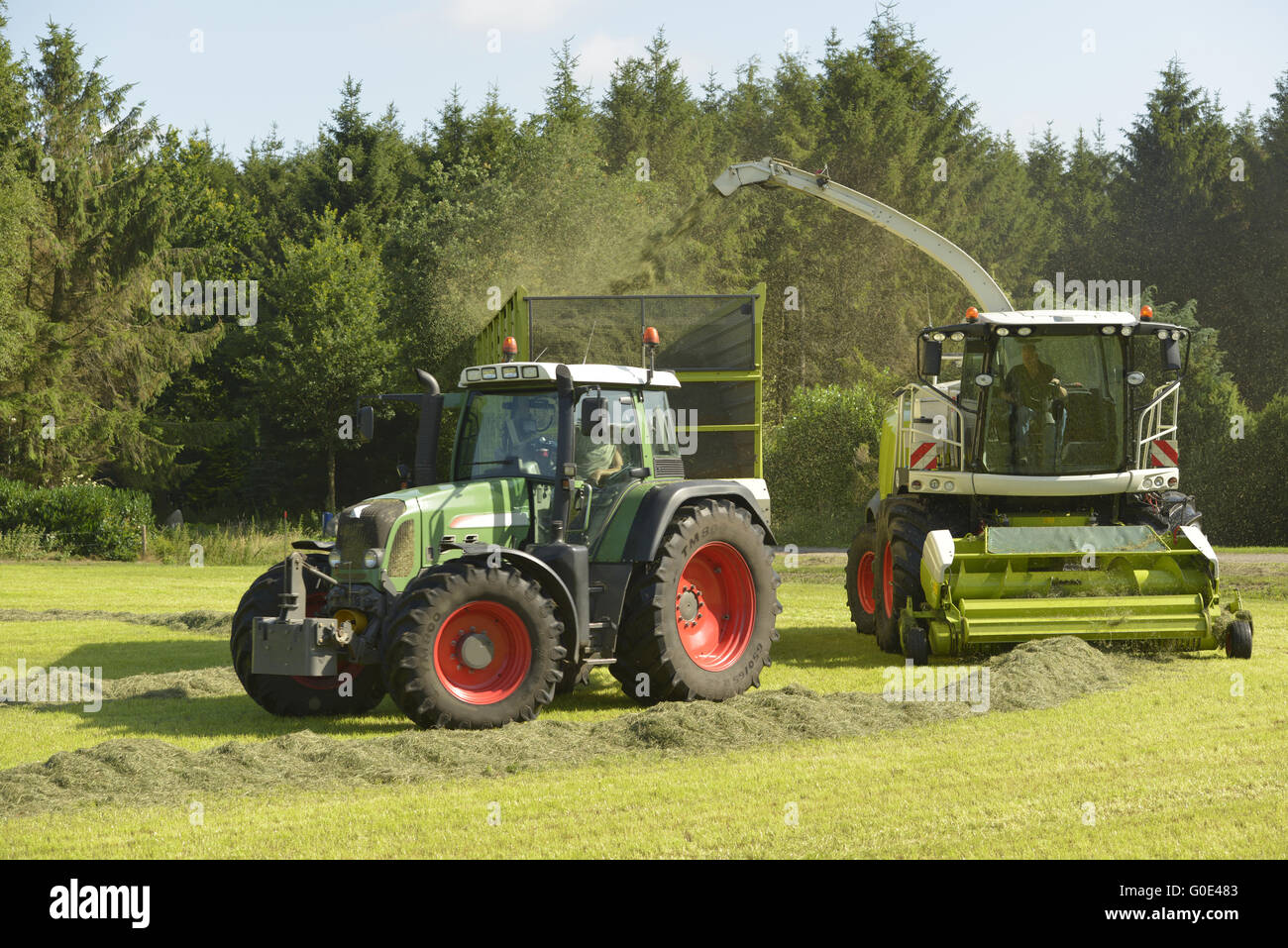 Agriculture, forage harvester and transport grass - Stock Image