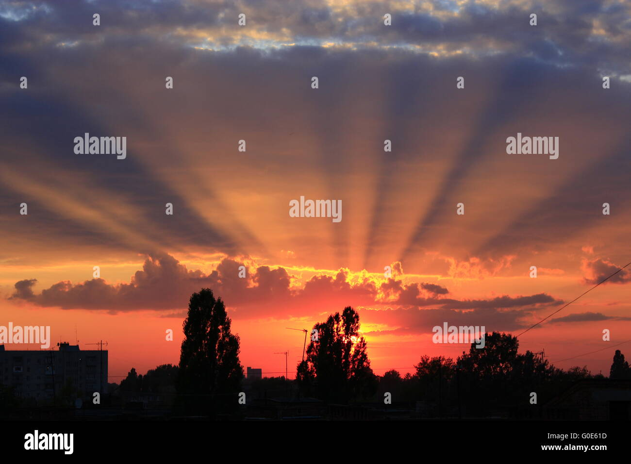 dark beautiful summer sunset above the trees - Stock Image