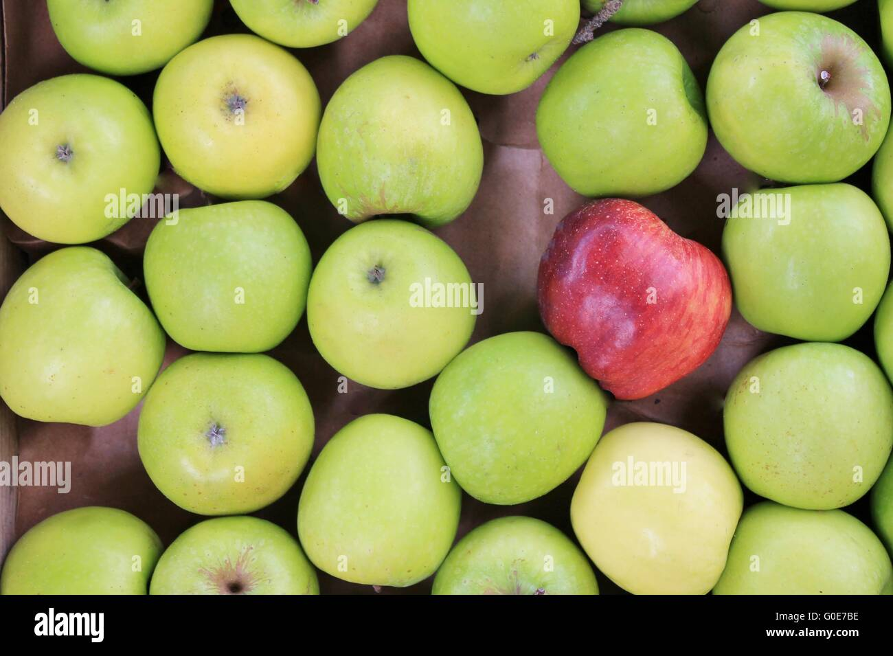 different concepts - red apple between green apple - Stock Image