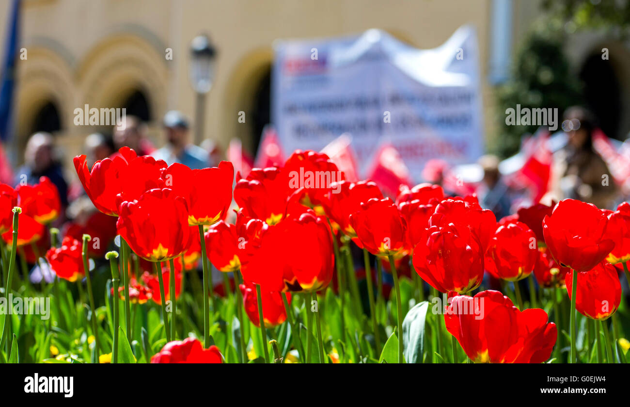 Oviedo, Spain. 1st May, 2016. Field of tulips with thousands of demonstrators at the bottom during the May Day Rally - Stock Image