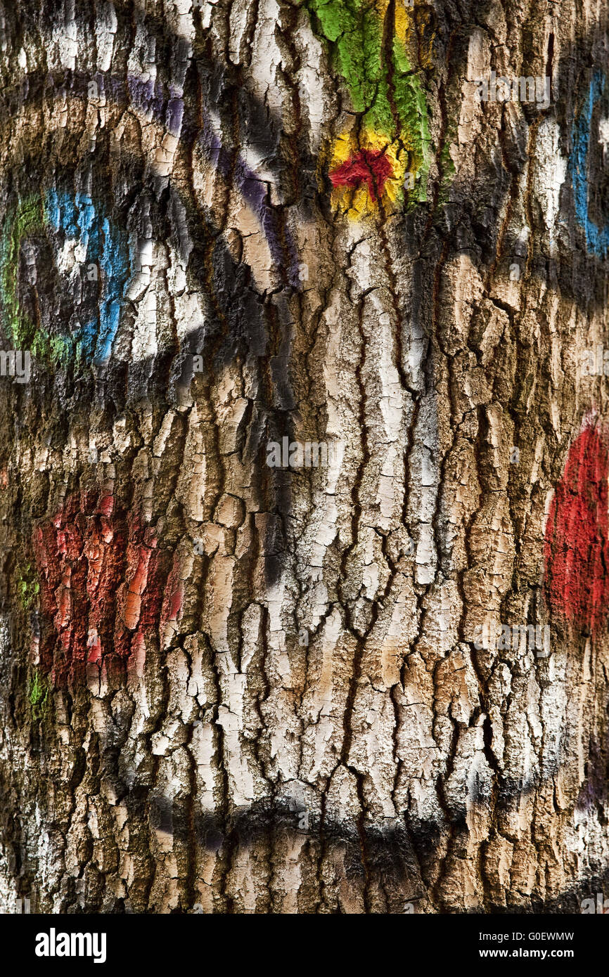 Painted face on a tree, Vlotho, Germany - Stock Image