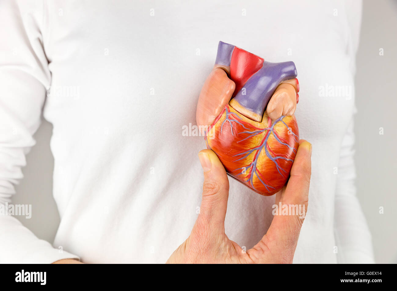 Chest Blood Vessels Stock Photos & Chest Blood Vessels Stock Images ...
