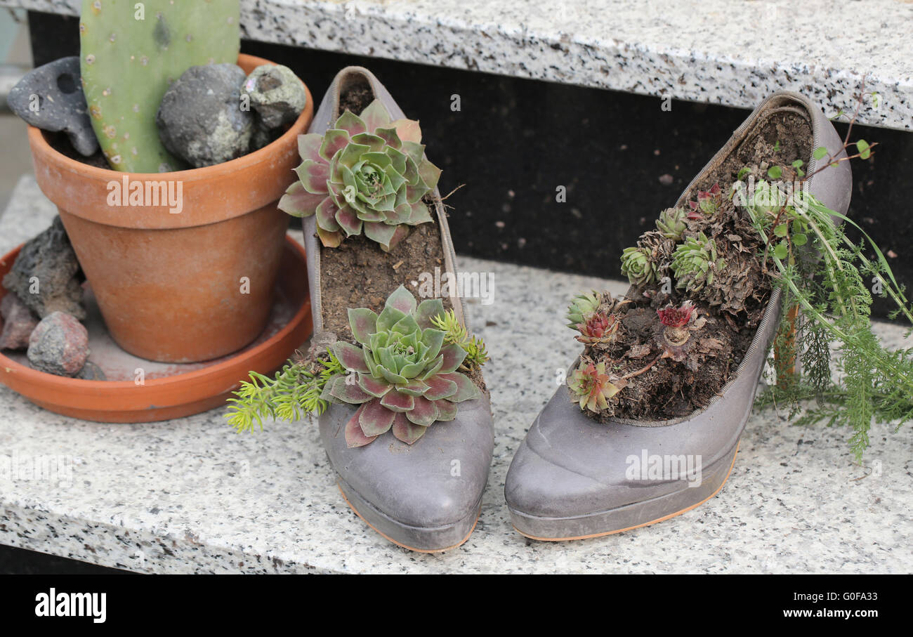High Heels with plants - Stock Image
