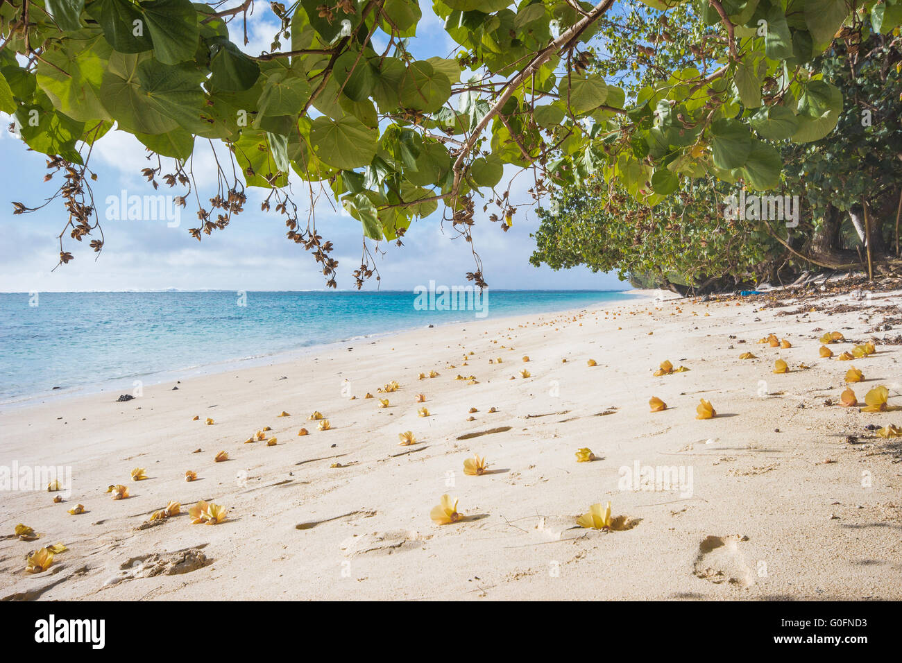 Flowers on the beach of Rarotonga - Stock Image