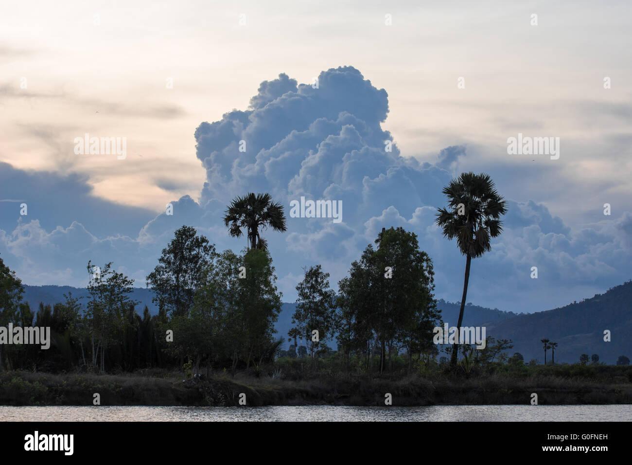 Palm trees at the riverside near Kampot, Cambodia - Stock Image