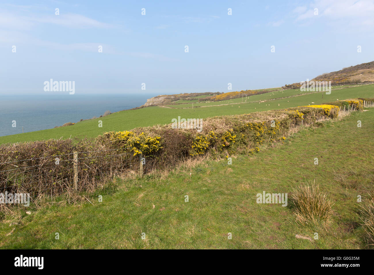 Picturesque spring view of the coastal headland at Red Wharf Bay, near the village of Mariandyrys. Stock Photo