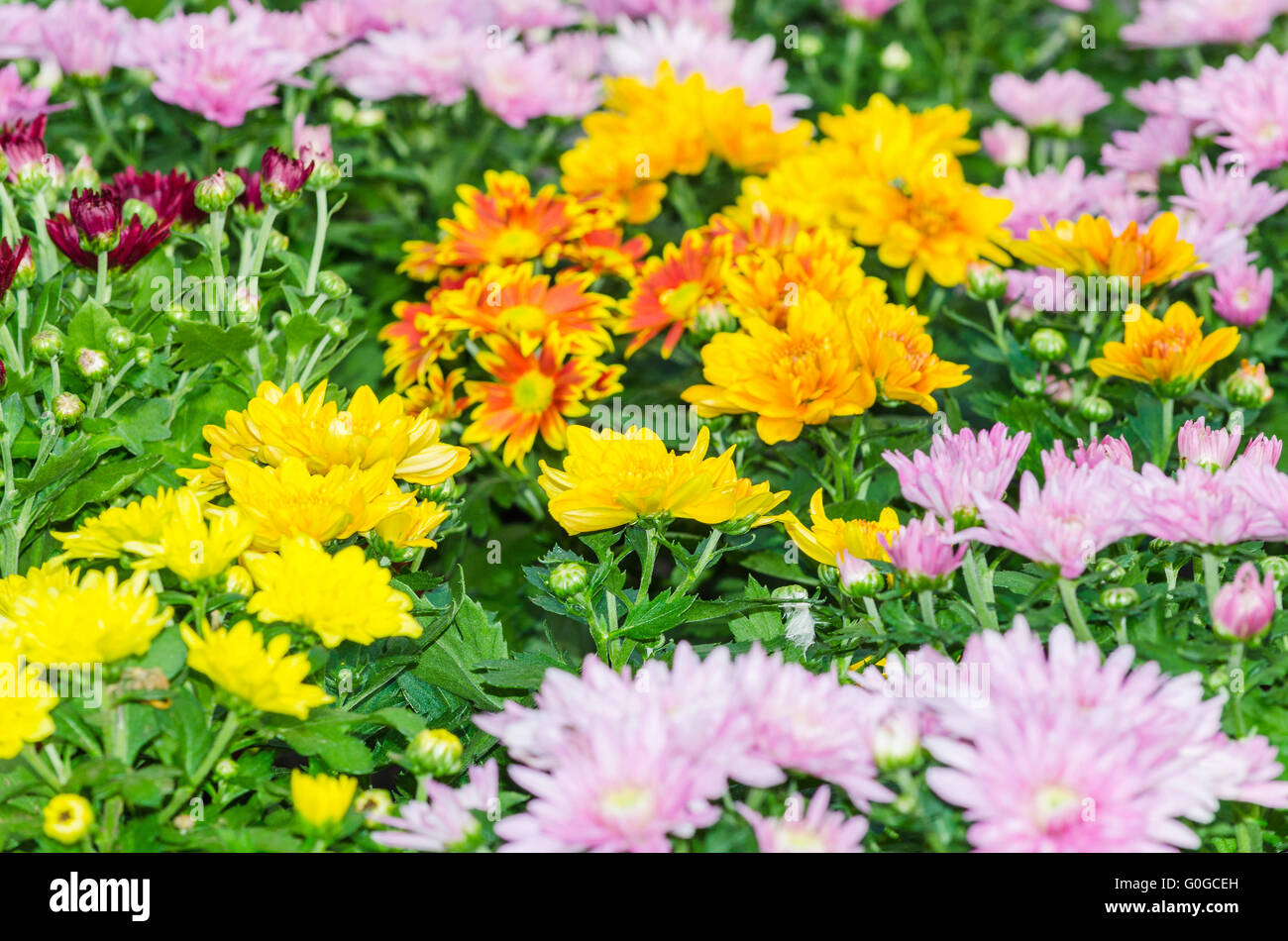 Various types of flowers stock photos various types of flowers various types of flowers stock image izmirmasajfo