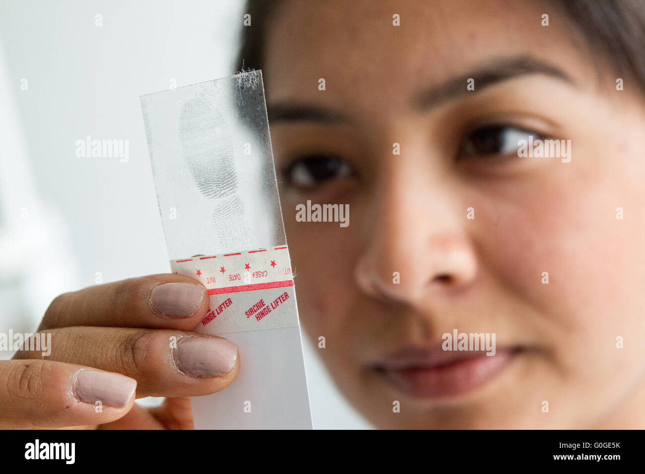 Forensic scientist examining fingerprint - Stock Image