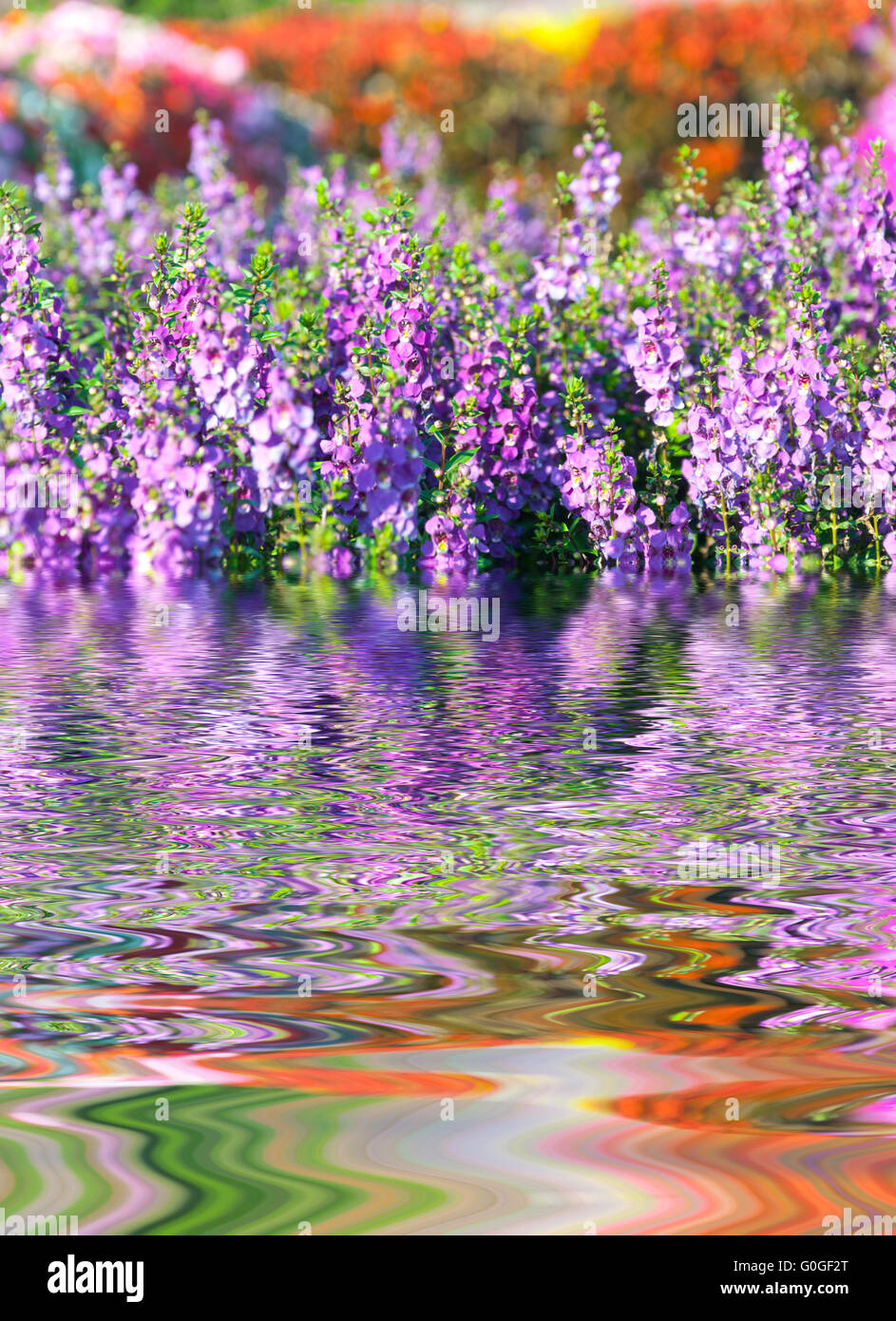Water Ripple and reflections of Flora on water - Stock Image