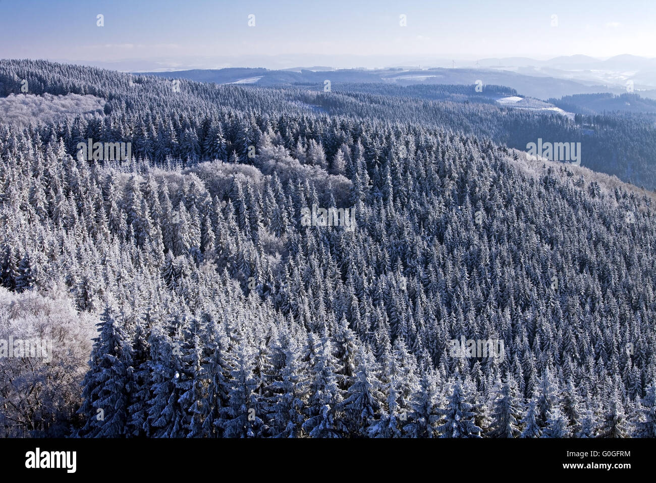 view from tower Schombergturm to snowy spruce forest near Wildewiese, Sundern, Germany - Stock Image