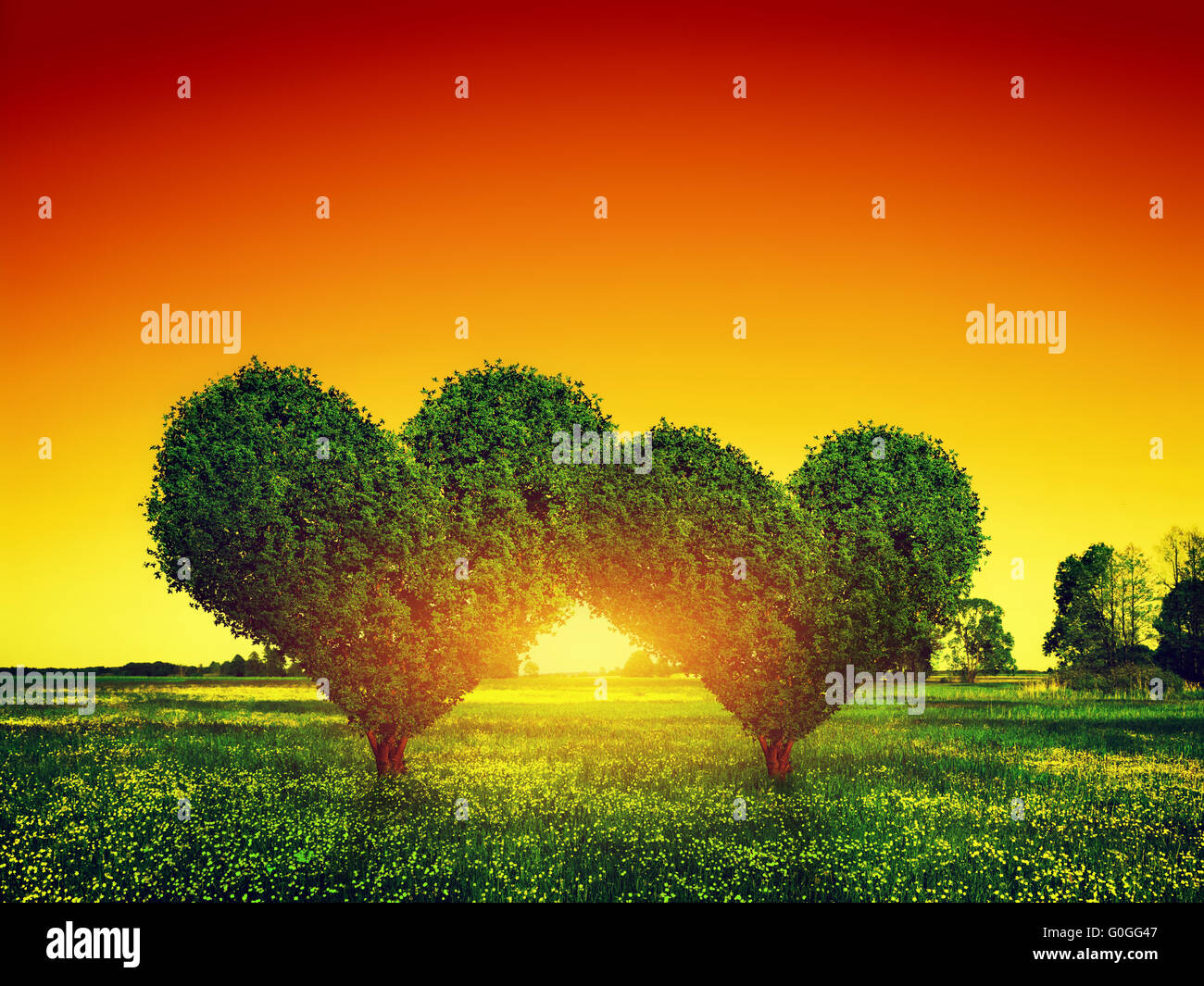 grass field sunset. Heart Shape Trees Couple On Green Grass Field Landscape At Sunset. Love Symbol Sunset