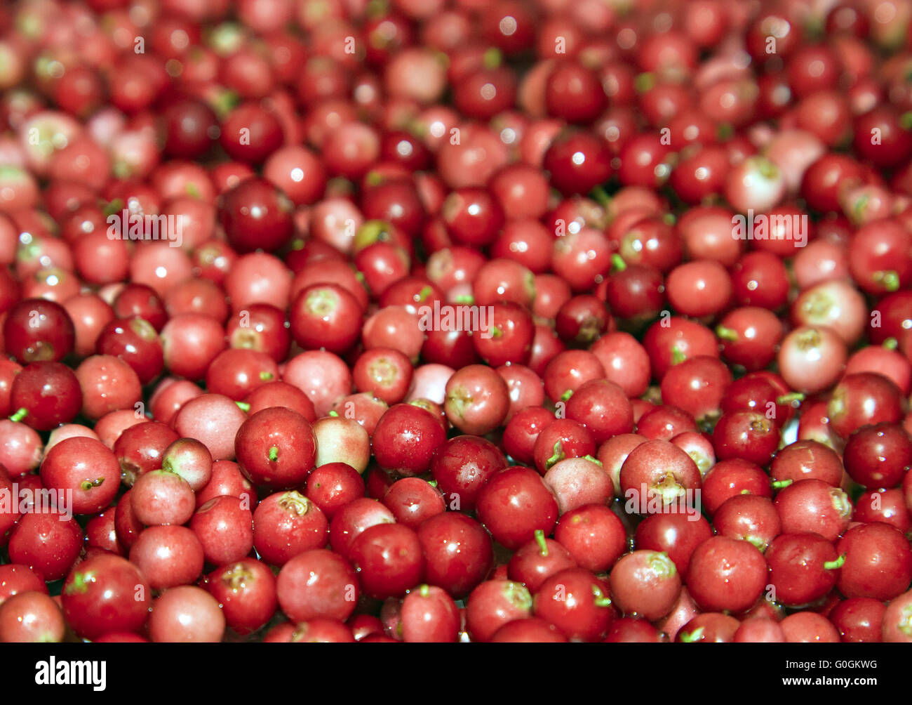 Heap of cowberry - Stock Image