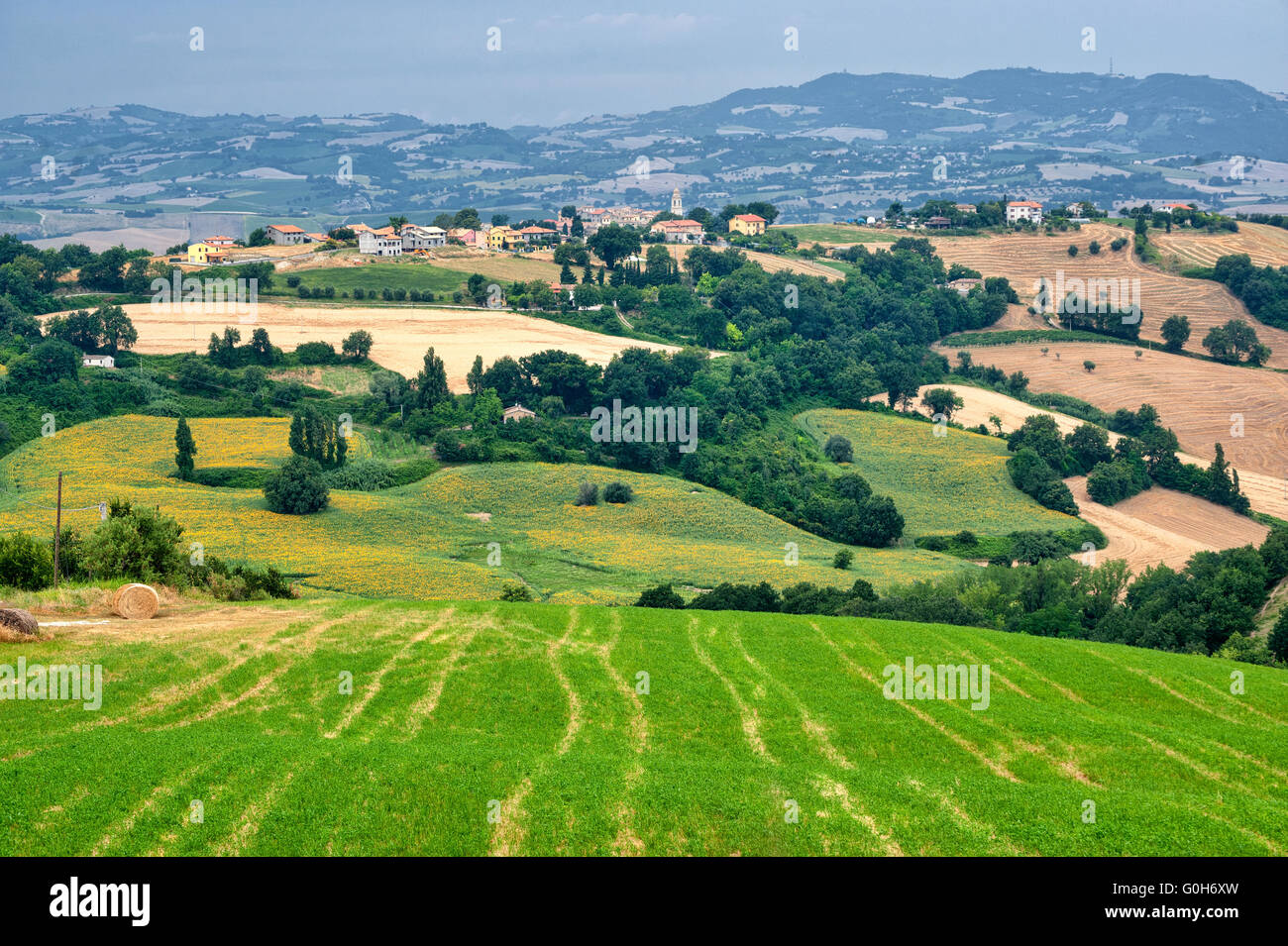 Country landscape in Marches (Italy) at summer - Stock Image