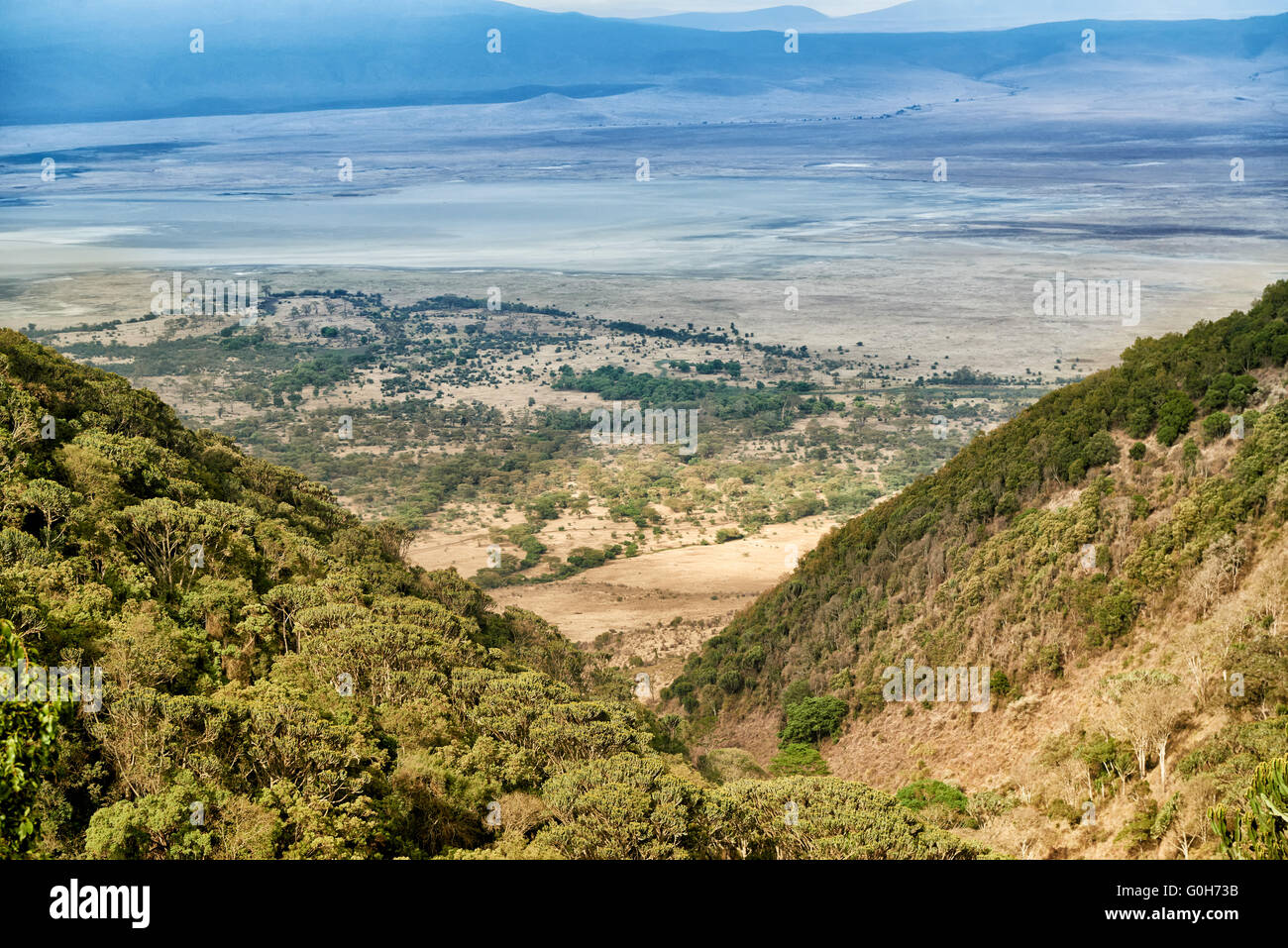 view from the rim into the Ngorongoro crater, Ngorongoro Conservation Area, UNESCO world heritage site, Tanzania, - Stock Image