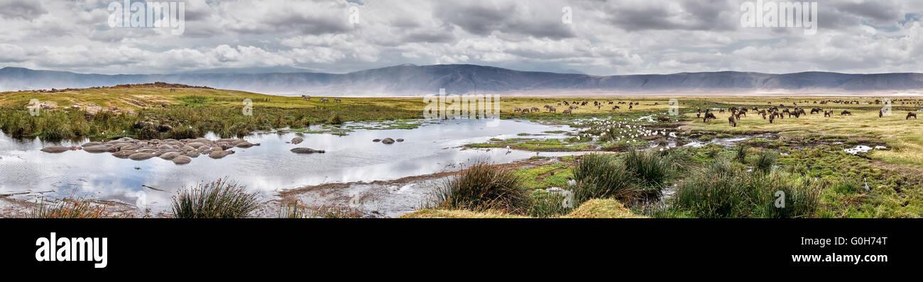 Panorama with many animals inside Ngorongoro crater, Ngorongoro Conservation Area, UNESCO world heritage site, Tanzania, - Stock Image