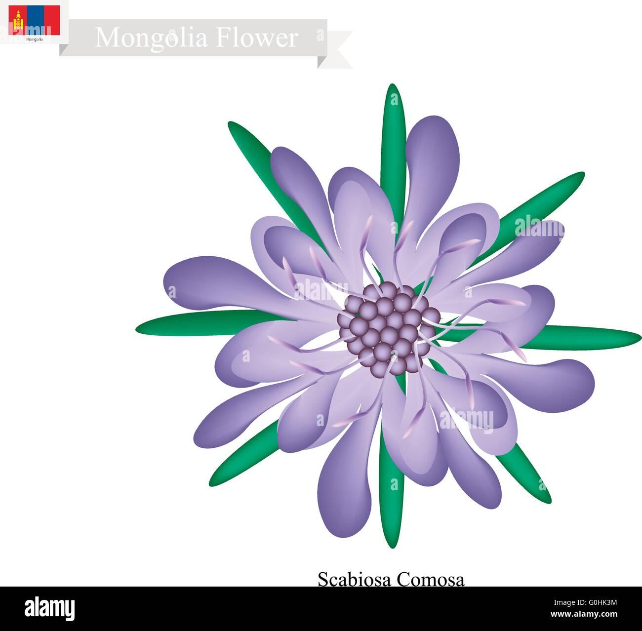 Mongolia Flower, Illustration of Scabiosa Comosa Flower. The National Flower in Mongolia. - Stock Vector