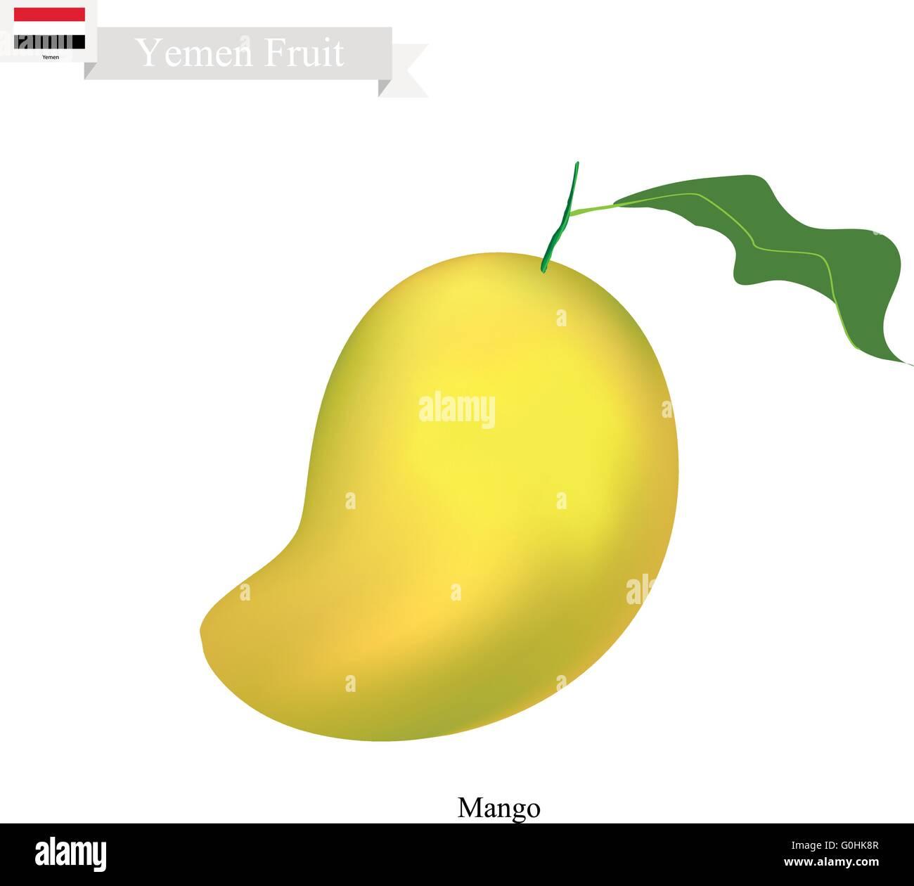 Yemen Fruit, Illustration of Mango. One of The Most Popular Fruits in Yemen. - Stock Vector