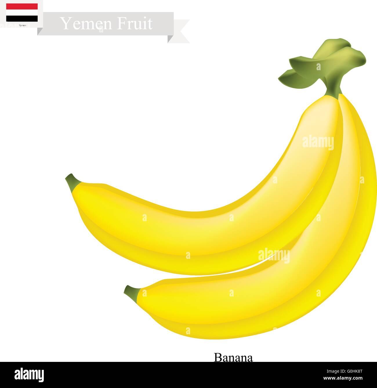 Yemen Fruit, Illustration of Banana. One of The Most Popular Fruits in Yemen. - Stock Vector