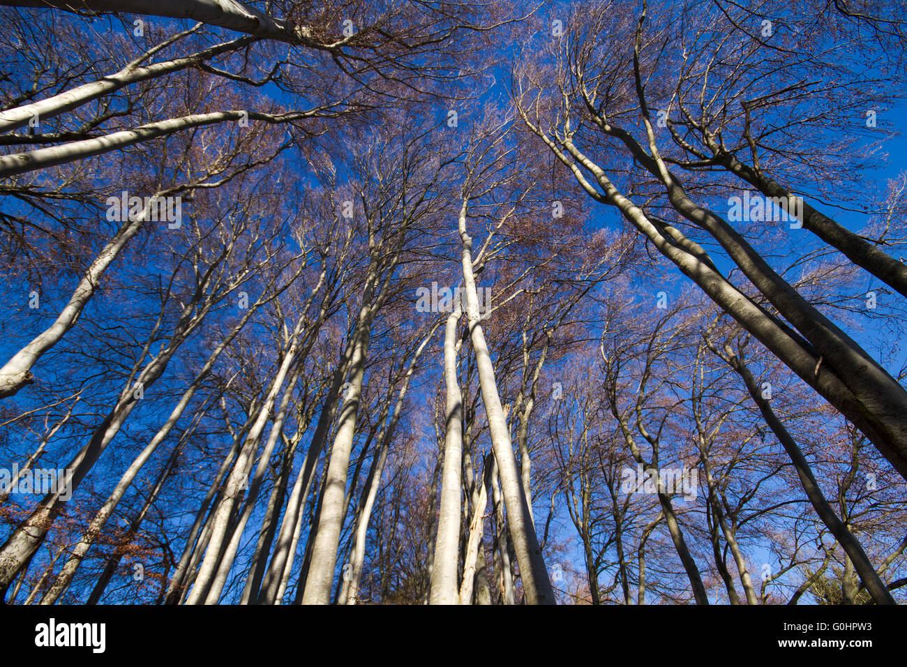 Beech forest at lake Chiemsee - Stock Image