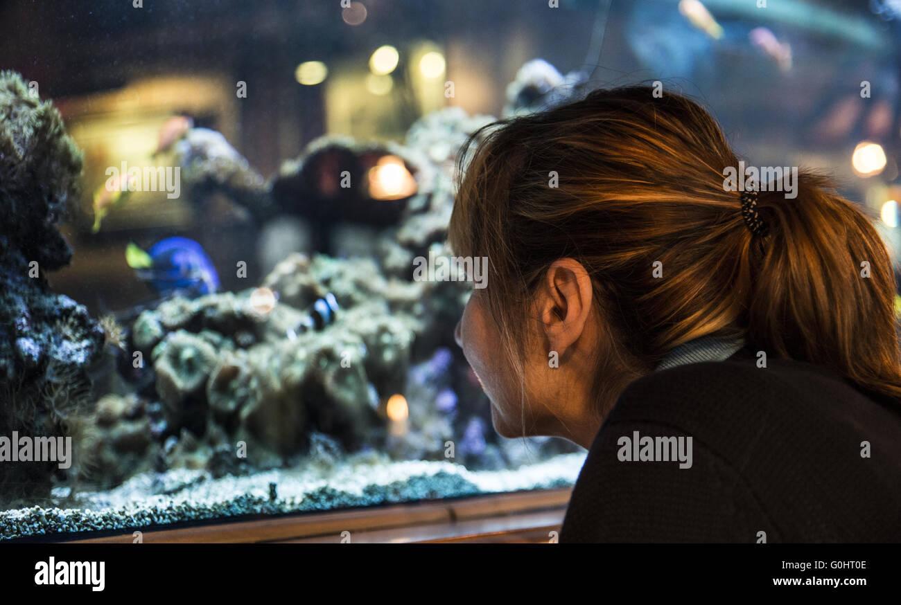 Woman looking into aquarium - Stock Image