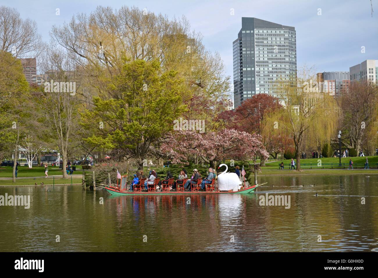 Tourists to Boston riding Swan Boats in the lagoon in the Boston ...