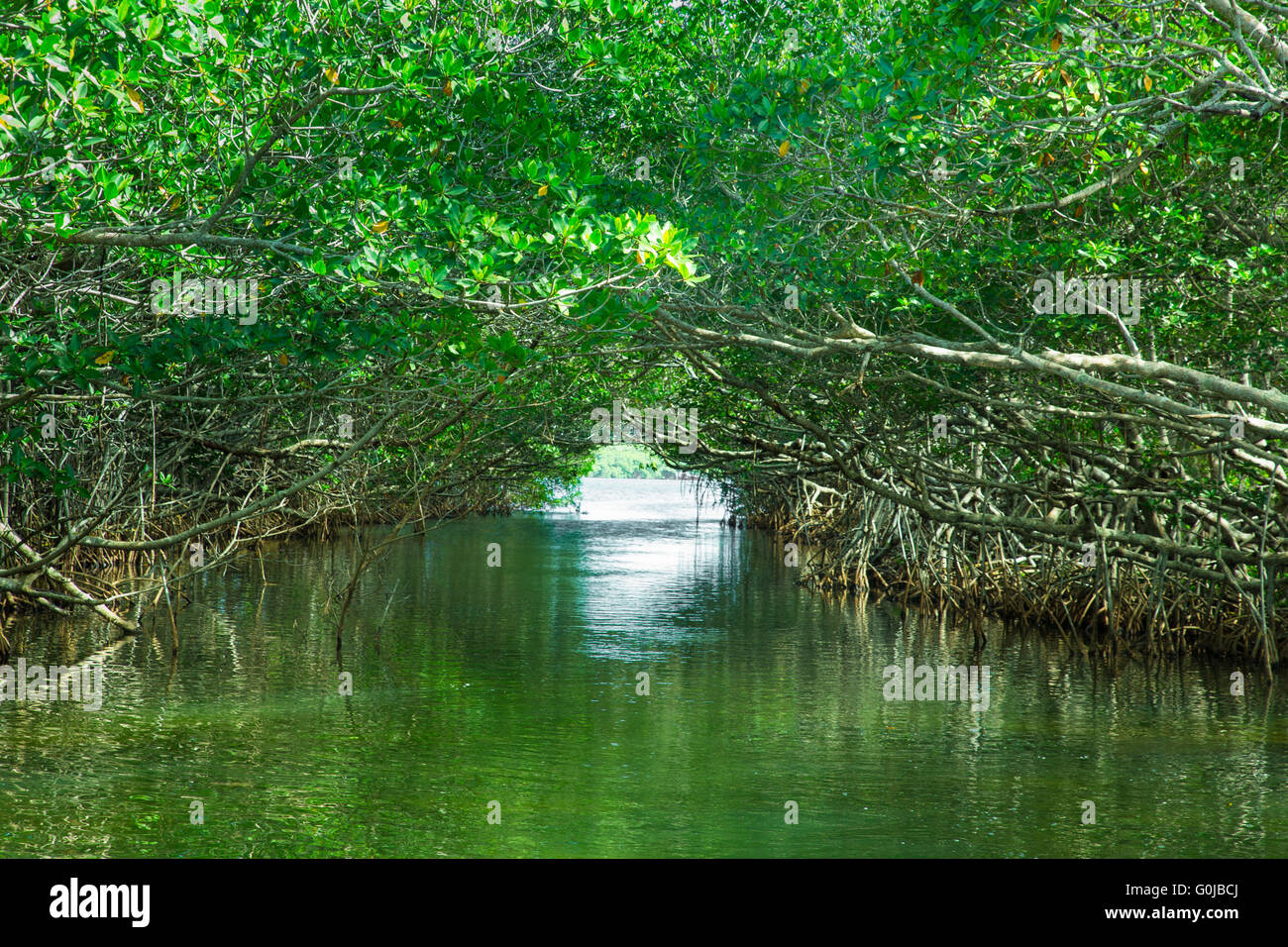 Eco-tourism image of mangroves at Everglades National Park in Florida USA - Stock Image