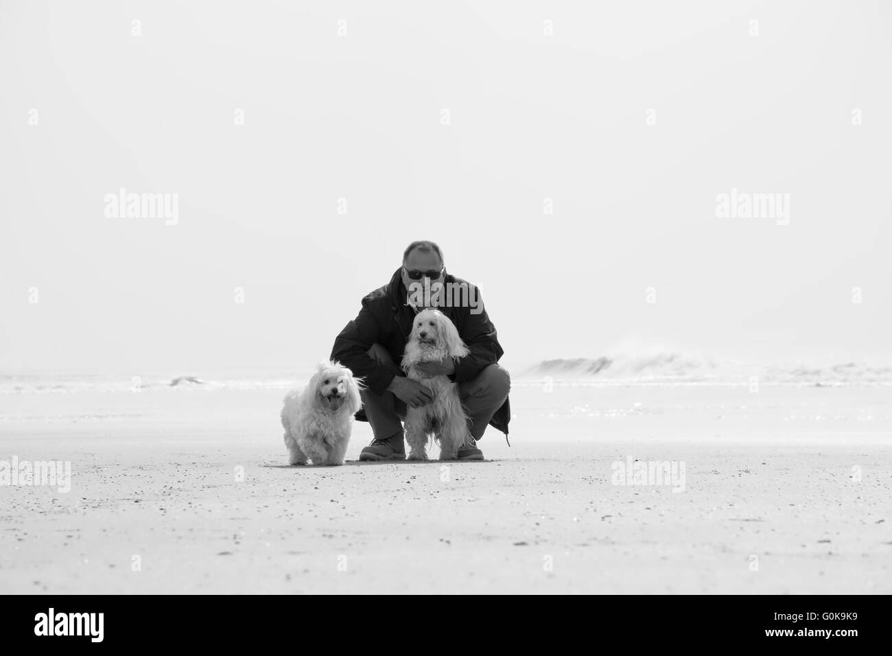 A man and his two dogs on the beach - Stock Image