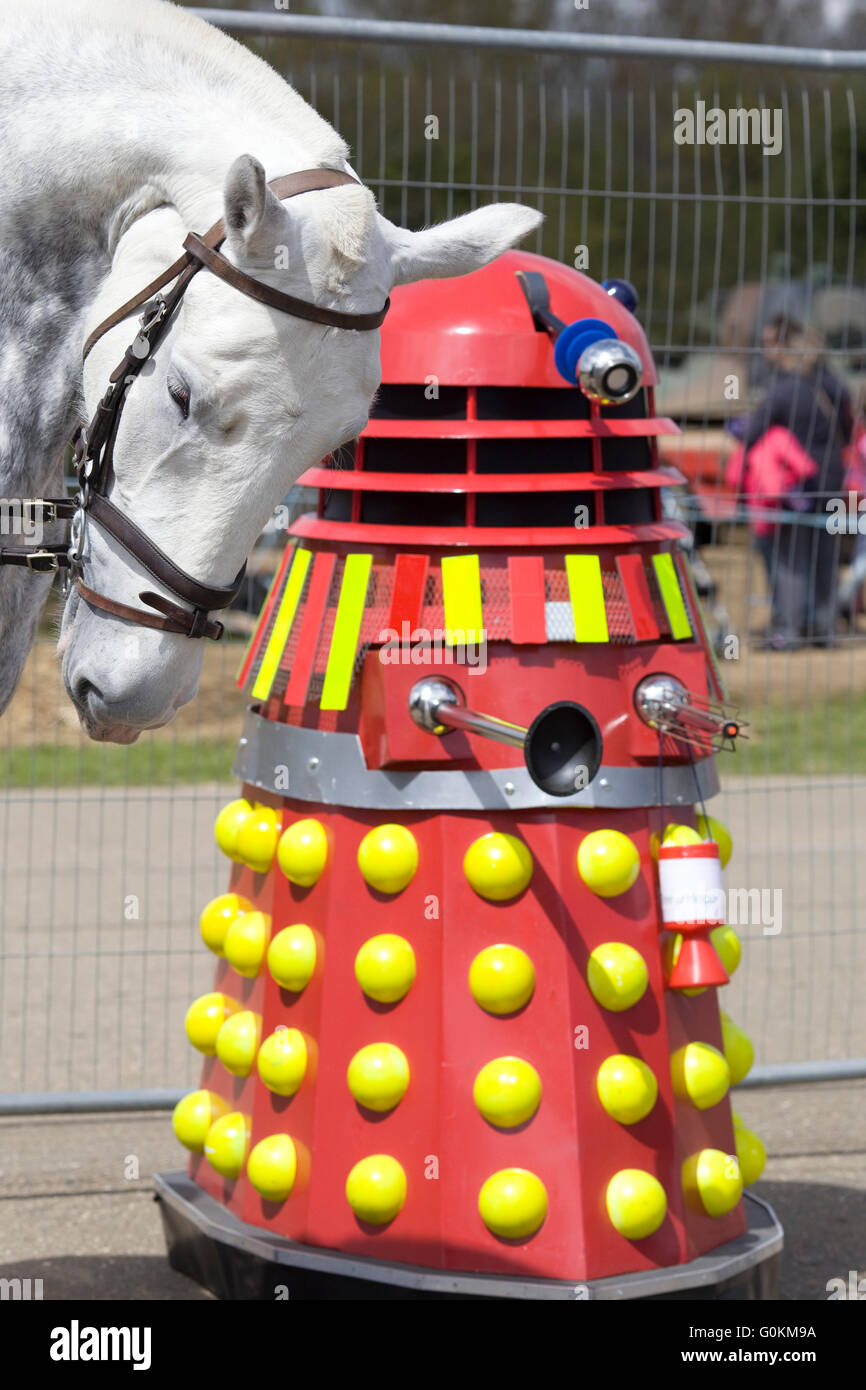 Horse bowing his head at the daleks - Stock Image
