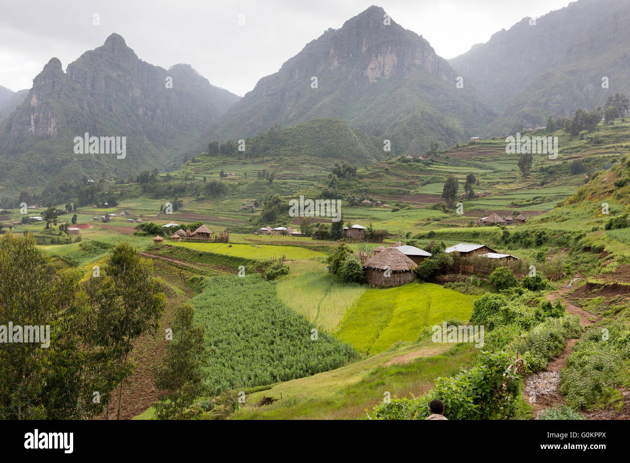 Ankober Woring Mesche Kebele, North Shewa,  Ethiopia, October 2013: steep slopes have been partly terraced. - Stock Image