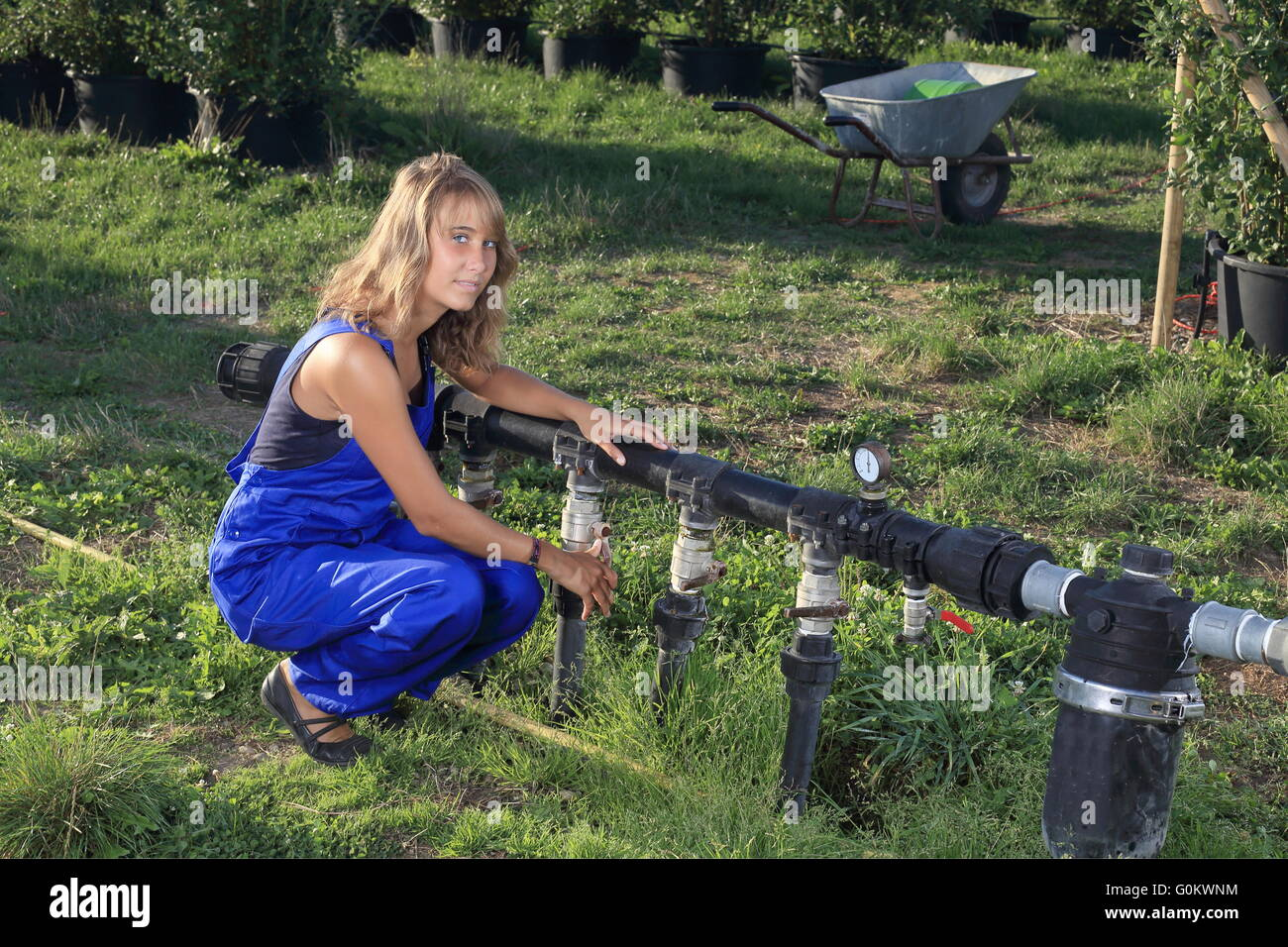 A Nursery gardening watering with a irrigation system - Stock Image