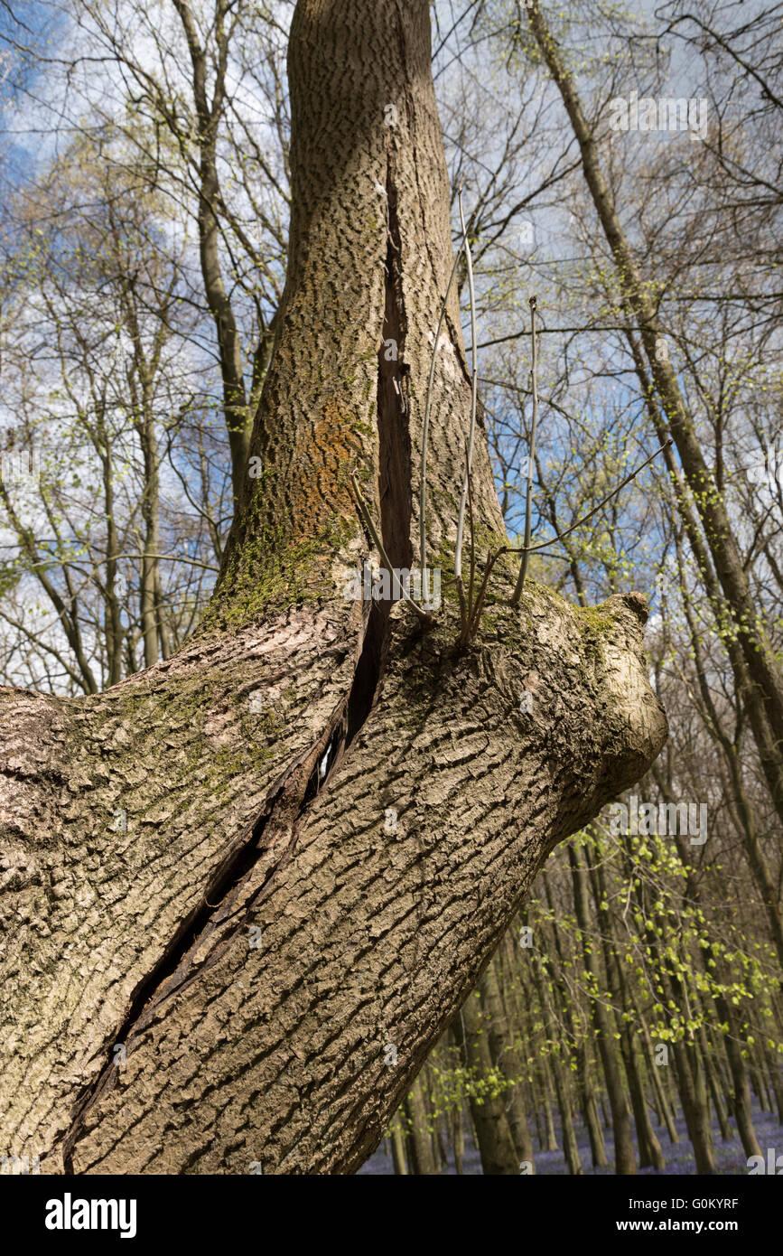 Split tree trunk stock photos
