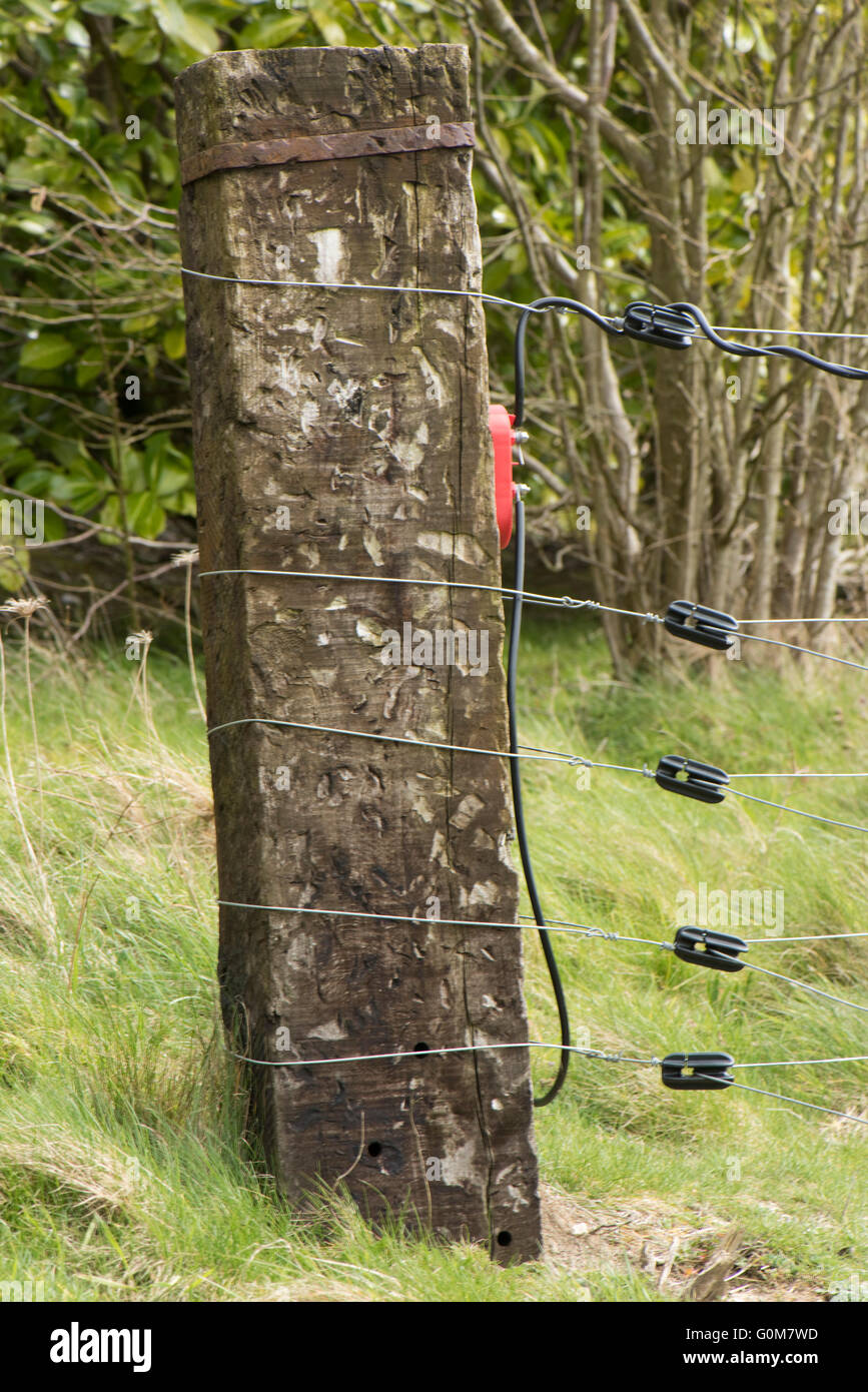 Sturdy Sleep Corner Post With Wires And Insulators For Electric Wiring Fence To Pen Livestock Berkshire