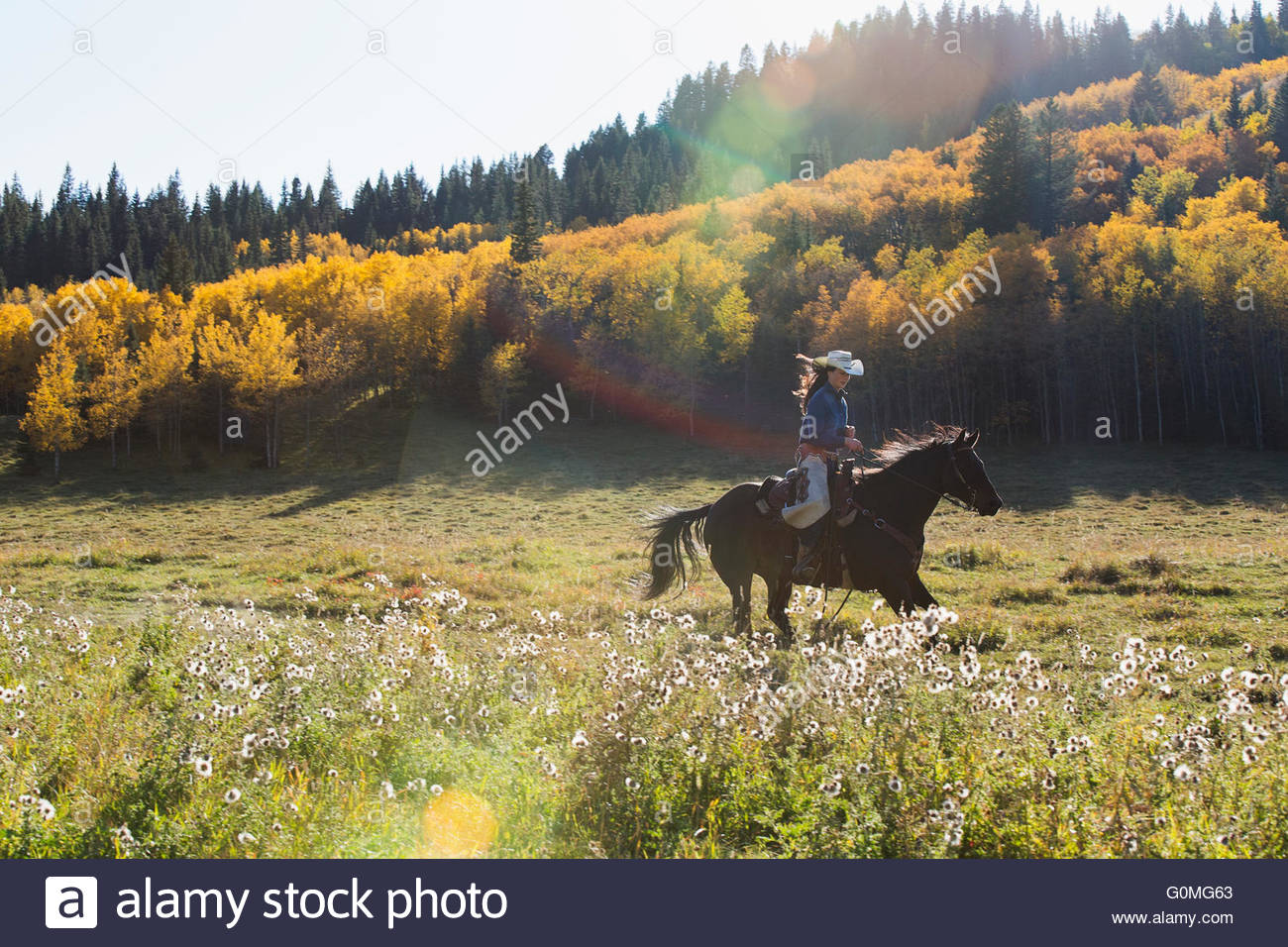 Woman horseback riding in sunny autumnal field - Stock Image