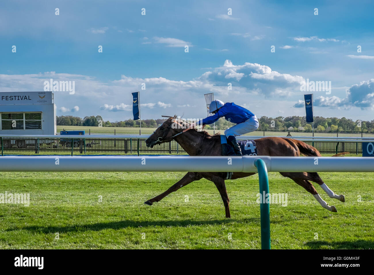 The winning horse Hawkbill from the QIPCO 2000 guineas race at the Newmarket Racecourses horses racing on a sunny Stock Photo