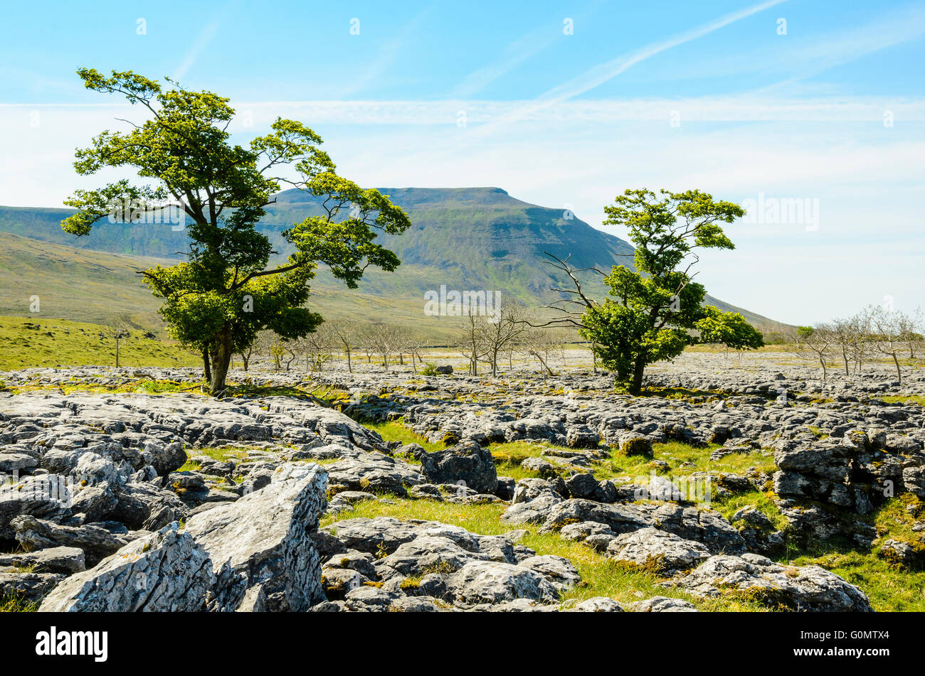Limestone scars below Ingleborough in the Yorkshire Dales National Park England Stock Photo