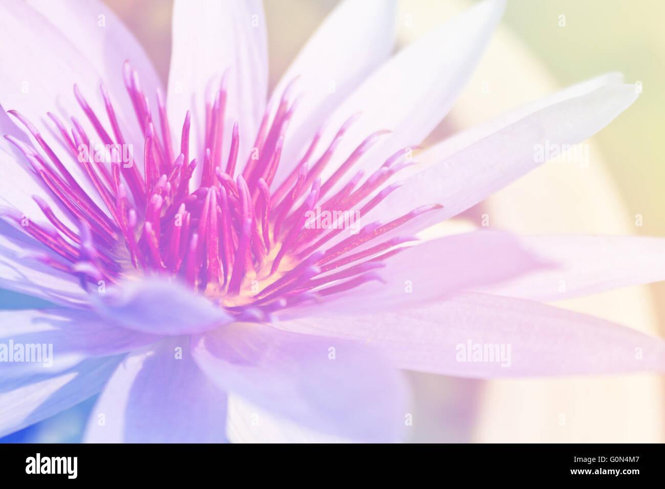 Lotus flower as symbol stock photos lotus flower as symbol stock beautiful lotus flower background symbol of nature stock image mightylinksfo