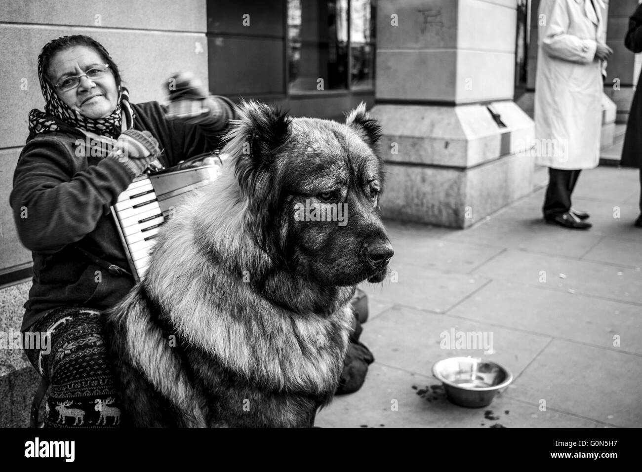 Homeless woman playing the accordion, with large dog, Westminster, London Stock Photo