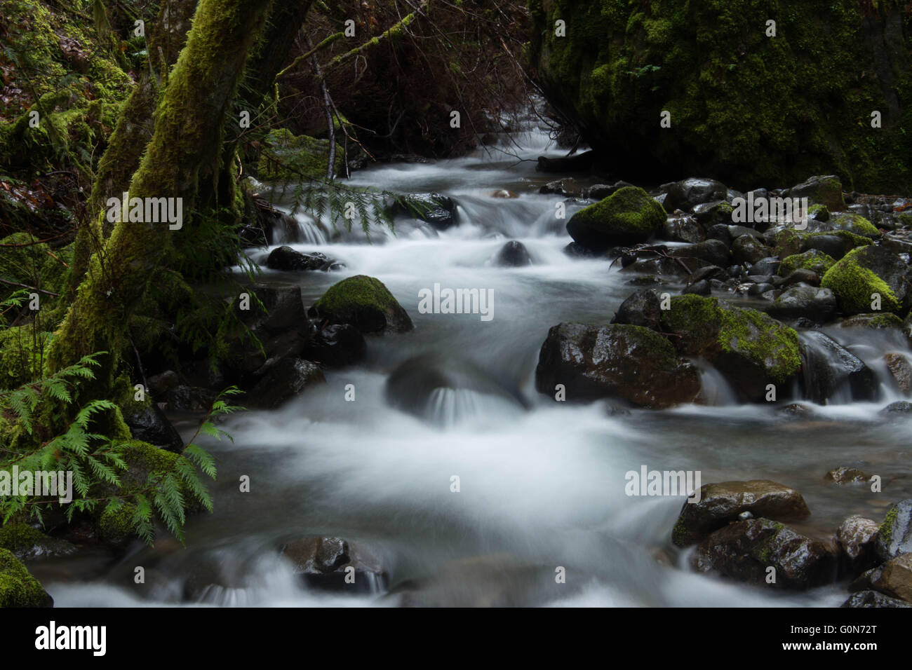 Fall Creek, Oregon, USA - Stock Image
