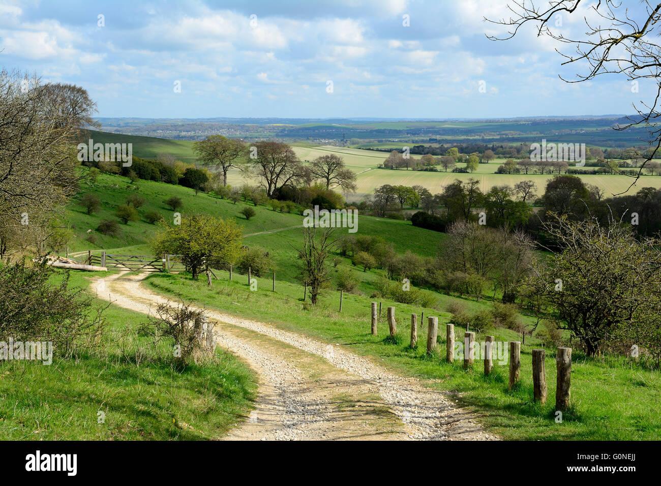 winding rural track through Ashridge in Chiltern Hills, England - Stock Image