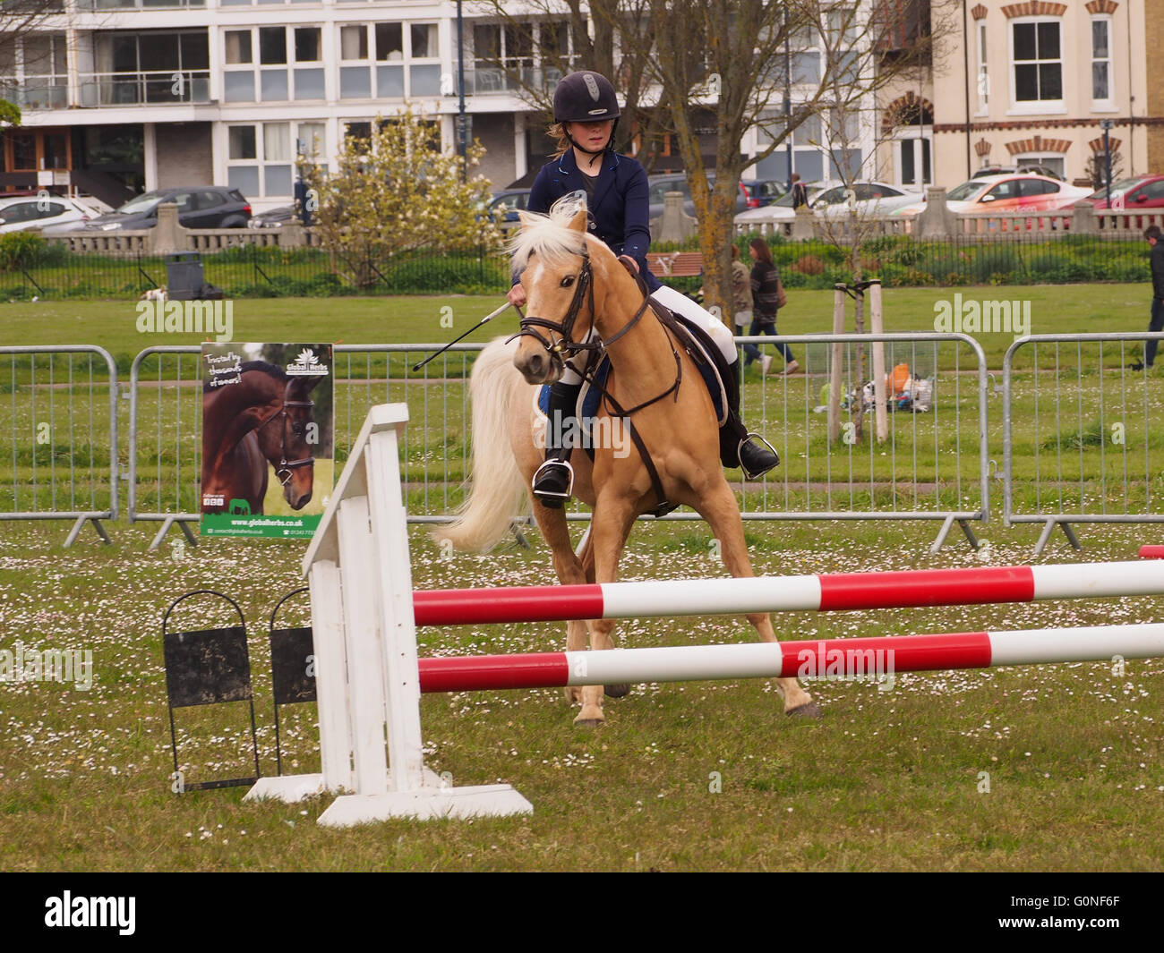 A horse refuses to jump a hurdle at a showjumping event. - Stock Image