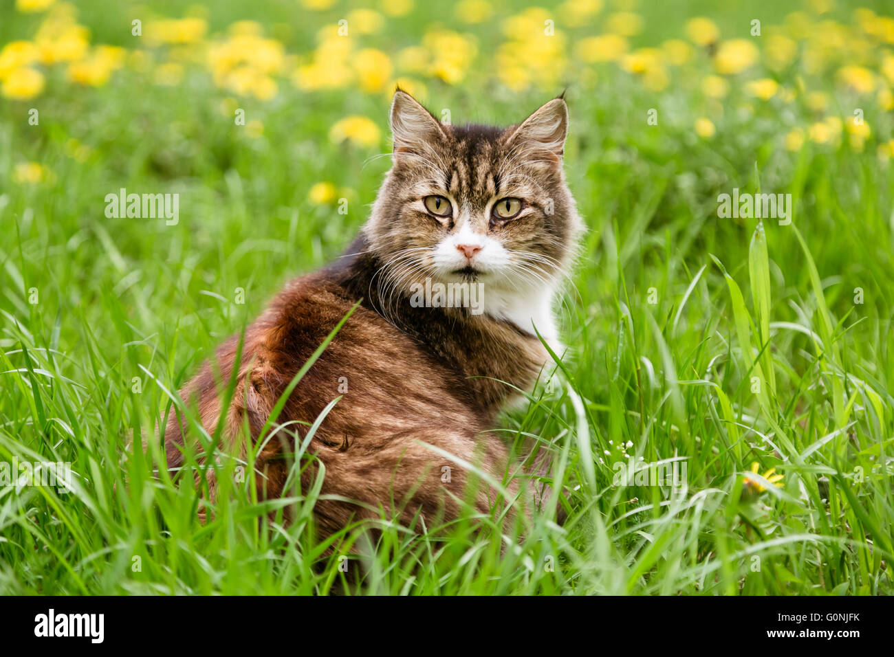 Portrait of frightened cat sitting in the lawn - Stock Image