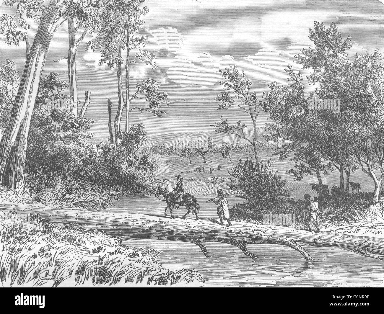 AUSTRALIA: Trunk of an Eucalyptus, antique print 1870 - Stock Image