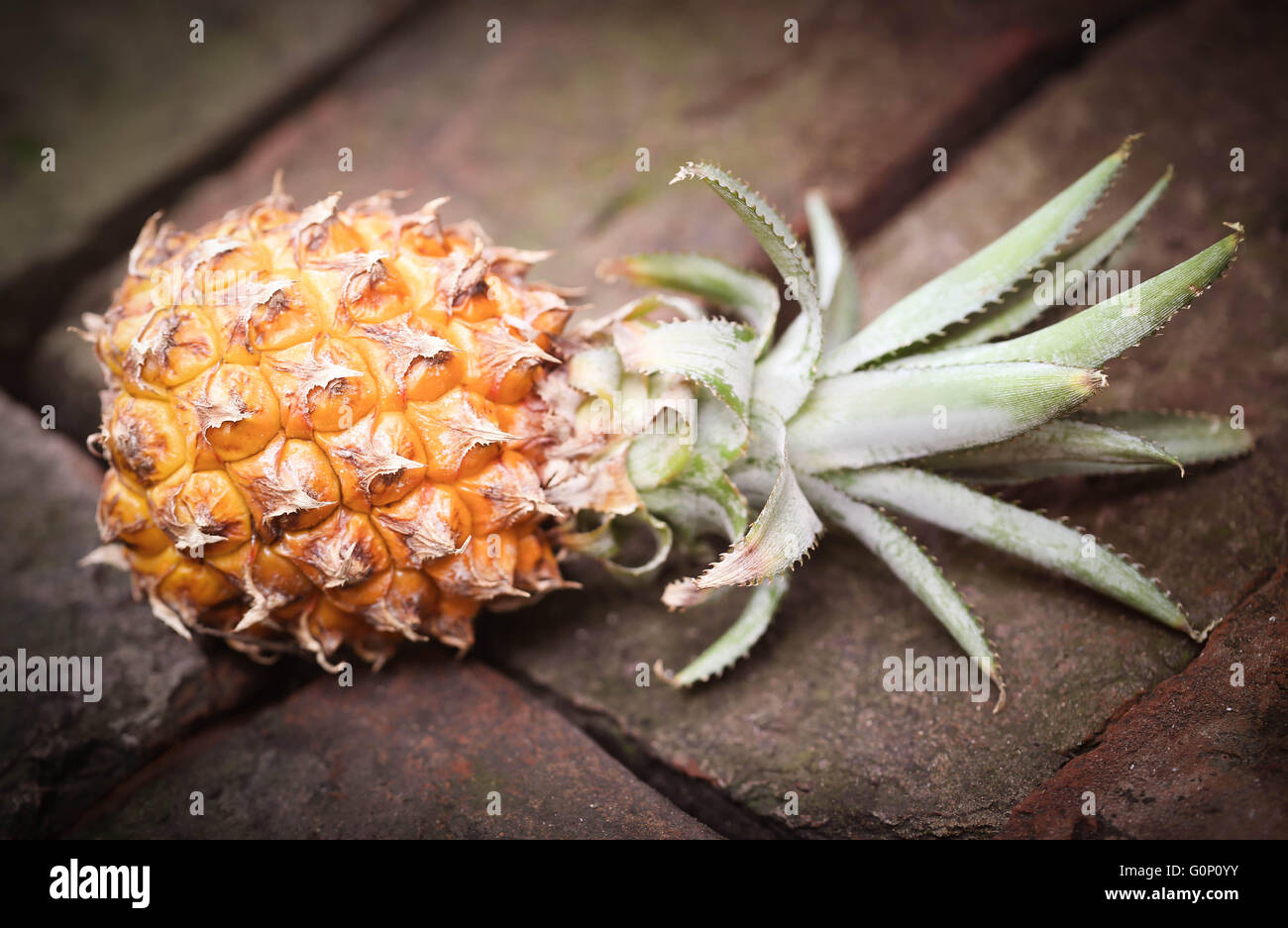 Popular honey queen pineapple of Bangladesh on brick surface - Stock Image