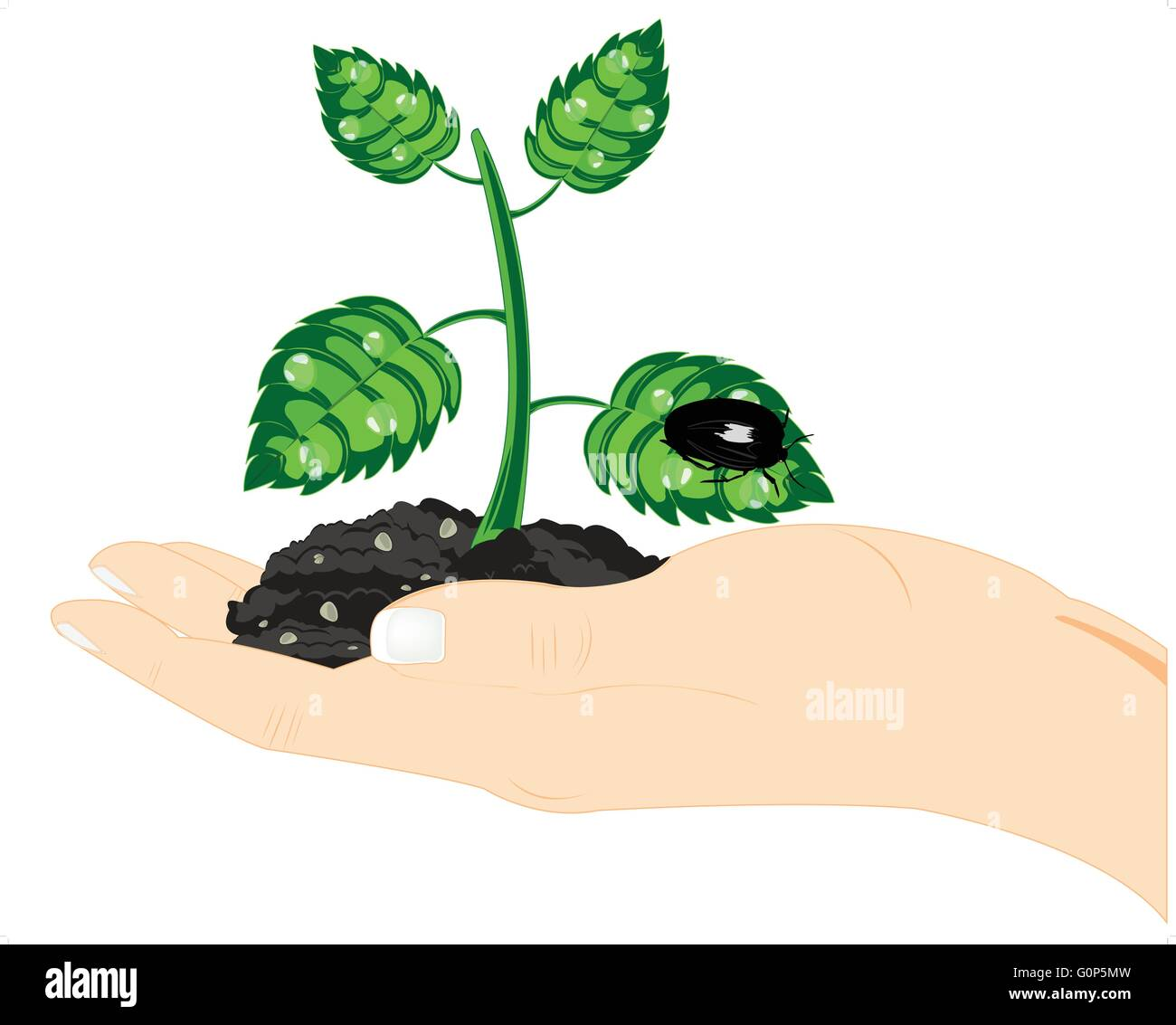Seedling of the plant in hand on white background is insulated - Stock Vector