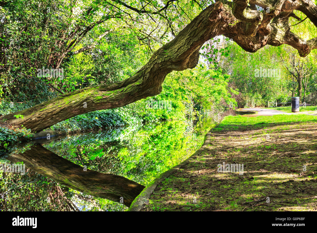 A weeping willow tree leans over a canal and towpath with dappled light at New River Walk, Canonbury, London - Stock Image